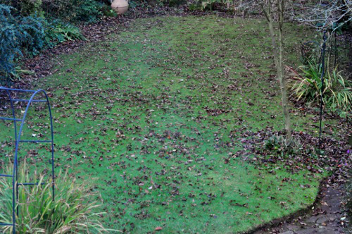 Leaves left on lawns over winter