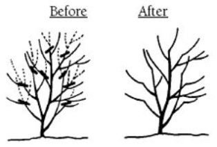 pruning_heading-back_SMALL (1)