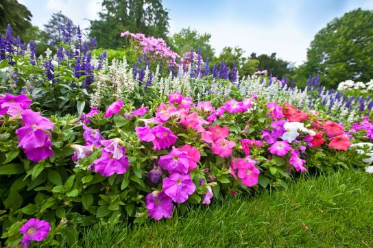 Annuals-planted-Green-Thumb-Landscaping