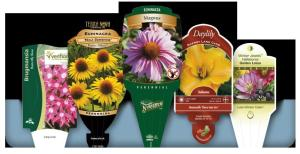 Plant-Tags-Information-Green-Thumb-Landscaping